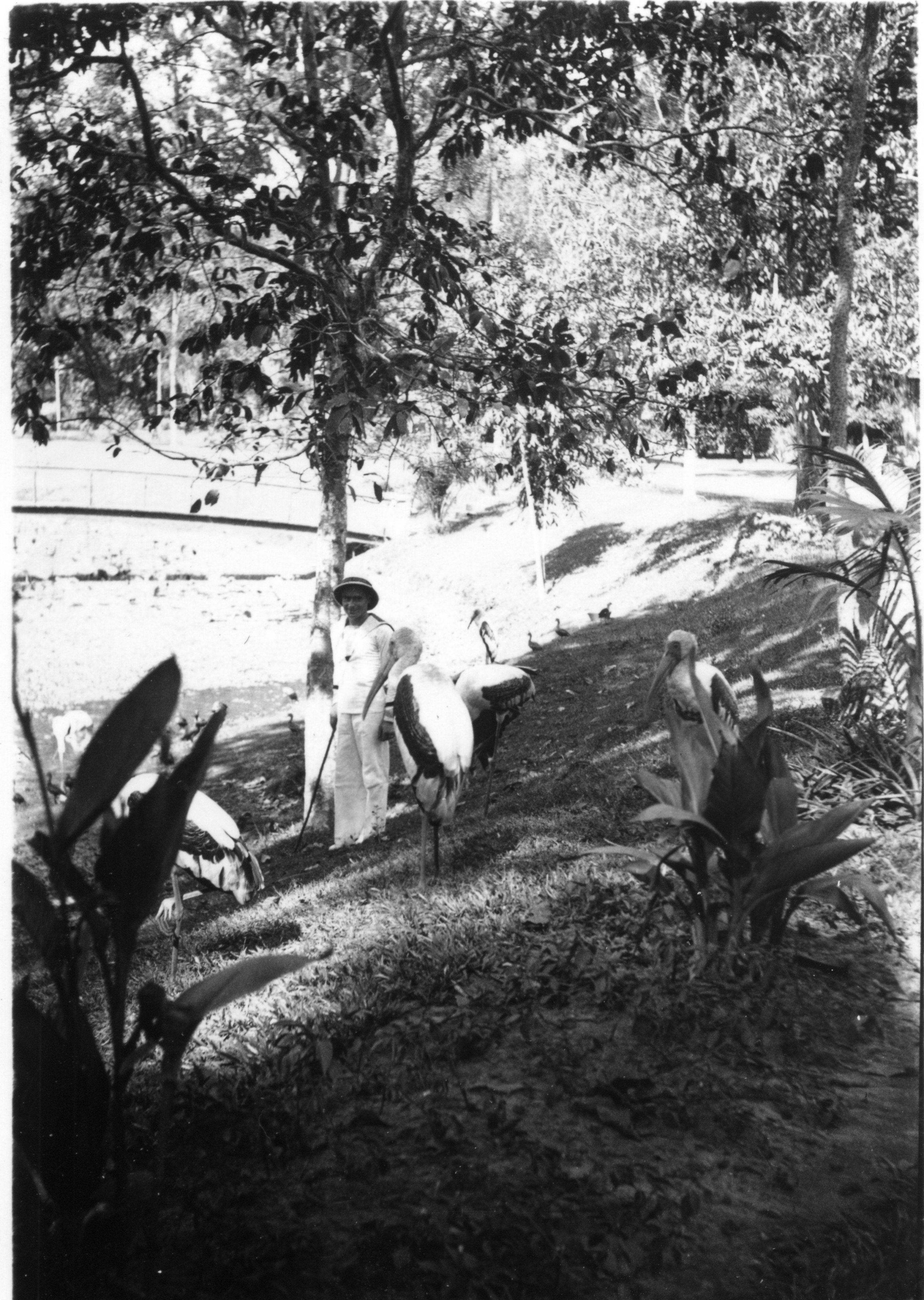 Le croiseur lamotte picquet en indochine for Jardin indochine
